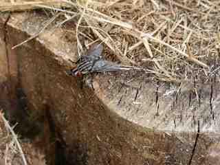 Comment repérer un nid de mouche ?