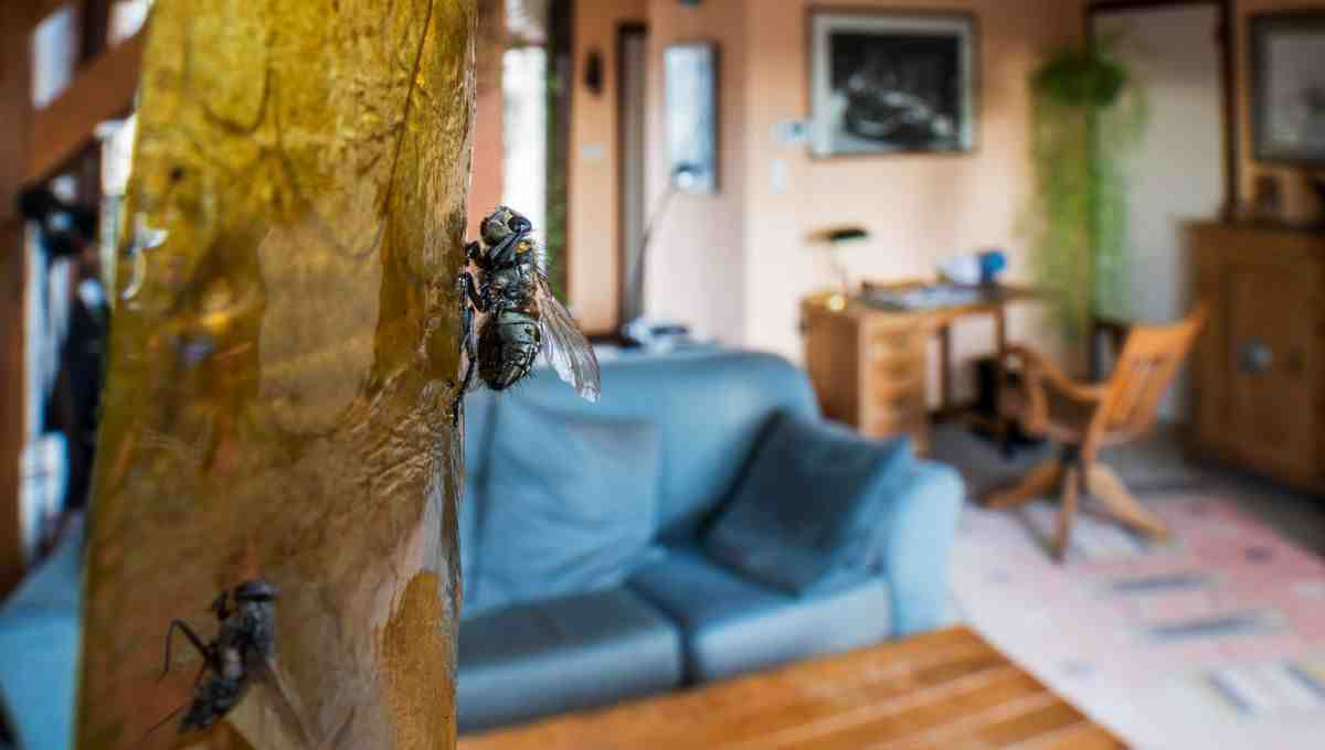 Comment savoir d'où viennent les mouches ?