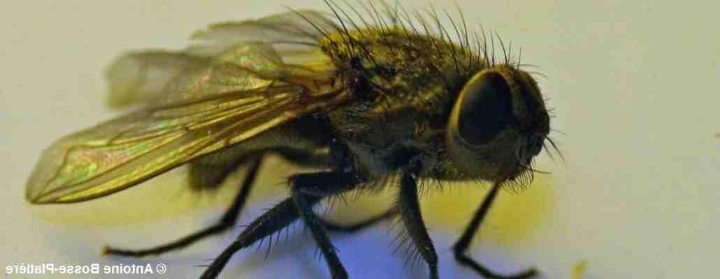 Comment savoir si on a un nid de mouche ?