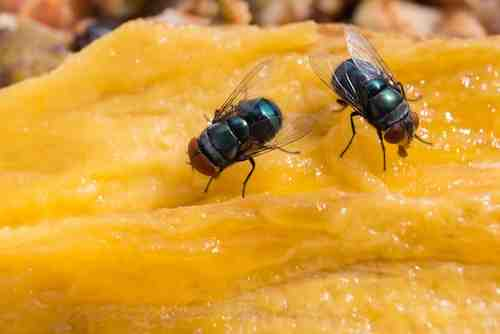 Comment se débarrasser des mouches dans la maison ?