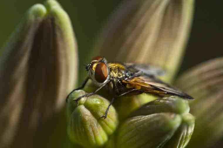 Comment se débarrasser des petites mouches à fruits dans la maison ?