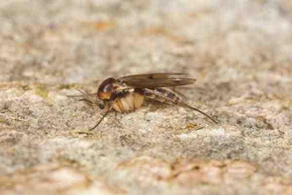Où pondent les mouches dans la maison ?