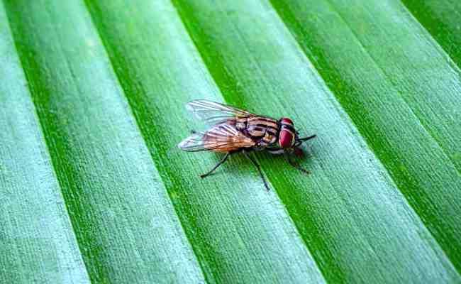 Pourquoi j'ai plein de mouches chez moi ?