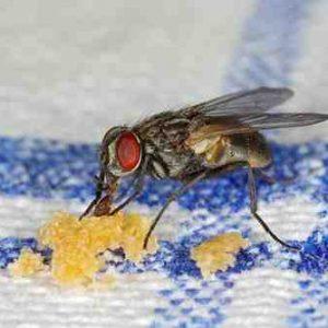Quel est le meilleur Anti-mouche ?