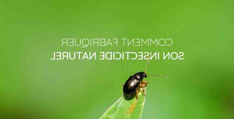 Quel est le produit le plus efficace contre les mouches ?