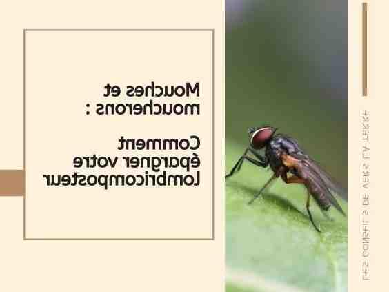 Quelle odeur les mouches n'aiment pas ?