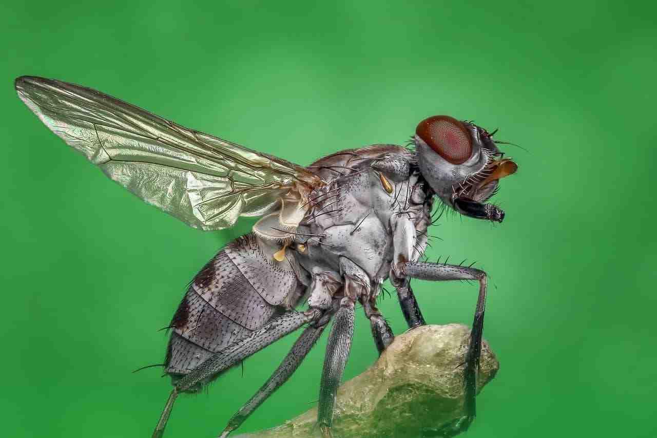 Quelle odeur repousse les mouches ?