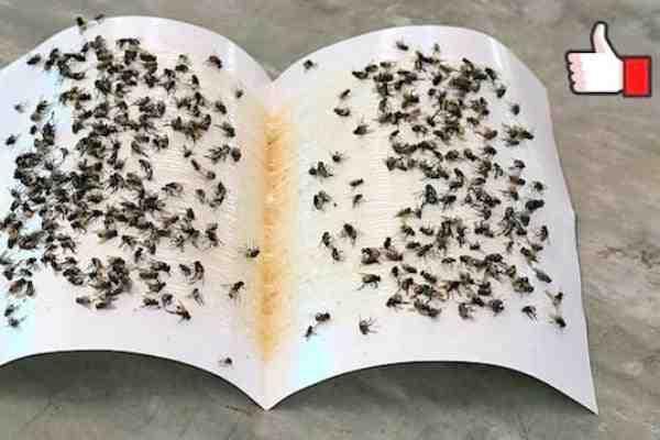 Qu'est-ce que les mouches détestent ?