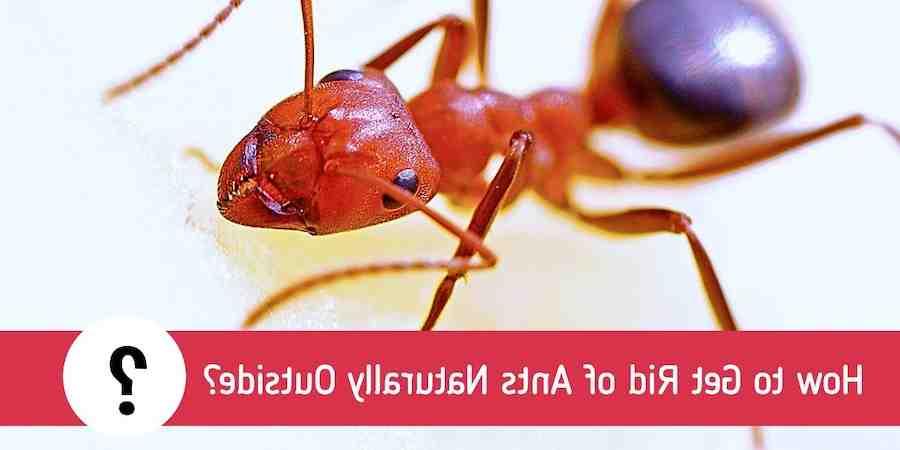Comment éradiquer les fourmis dans une cuisine ?