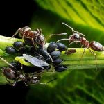 Comment en finir avec les fourmis ?