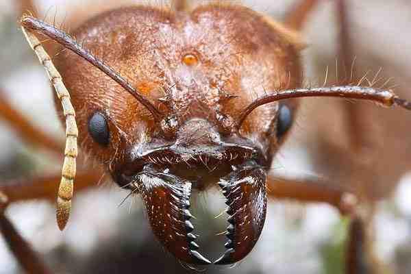 Comment faire fuir les fourmis ?