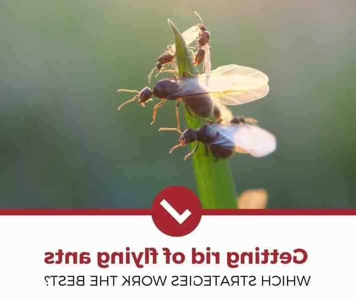 Comment se débarrasser de fourmis sur une terrasse ?