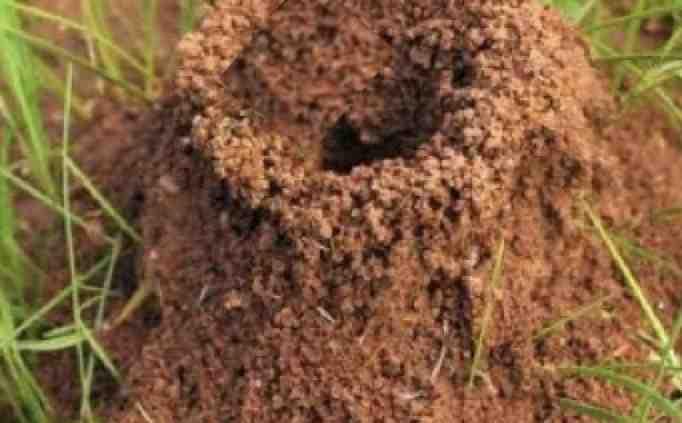 Comment se débarrasser des fourmis à l'extérieur ?