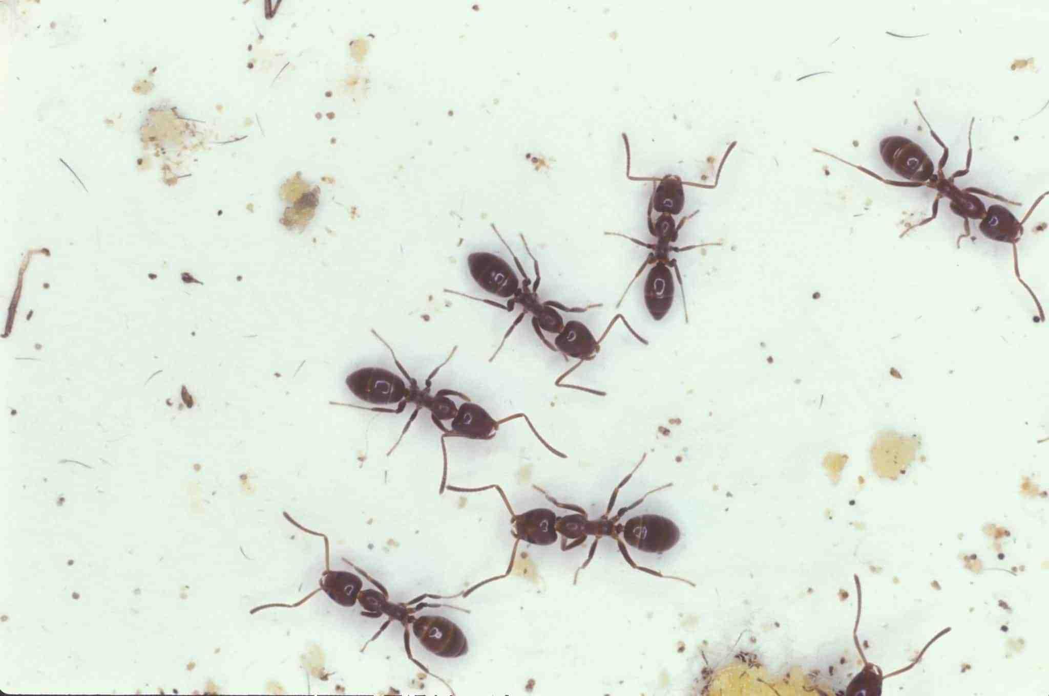 Comment se débarrasser des fourmis sur mon terrain ?