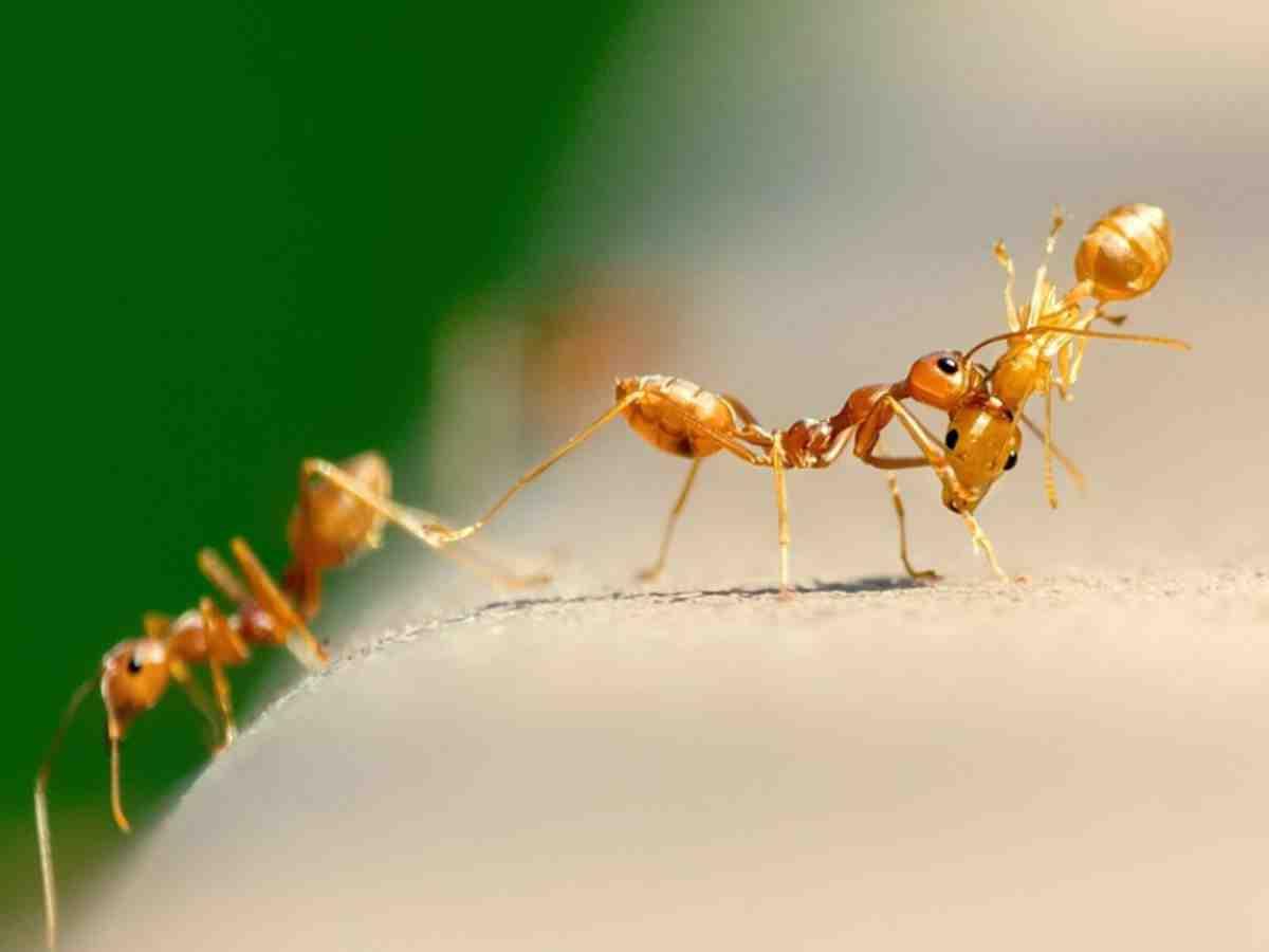 Comment se débarrasser d'une fourmilière dans le jardin ?