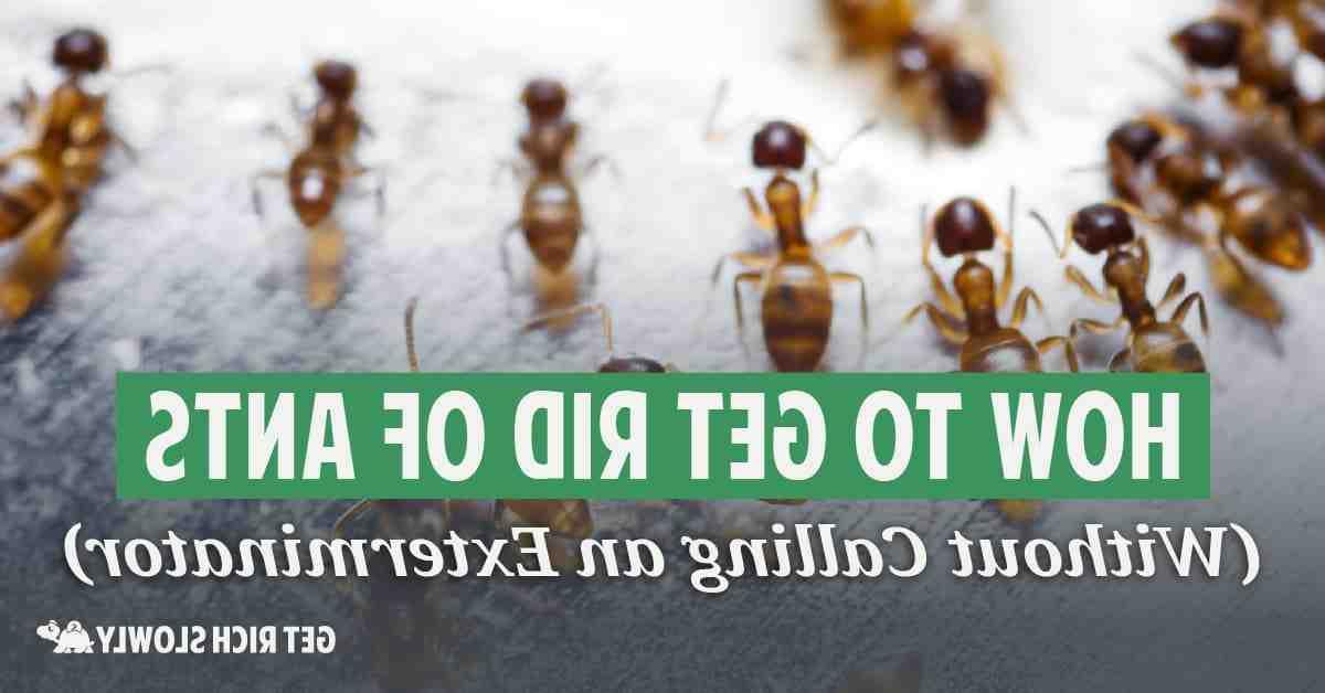 Comment se forme un nid de fourmis ?