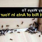 Comment se débarrasser des fourmis dans la maison ?
