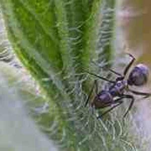 Est-ce normal d'avoir des fourmis dans la maison ?