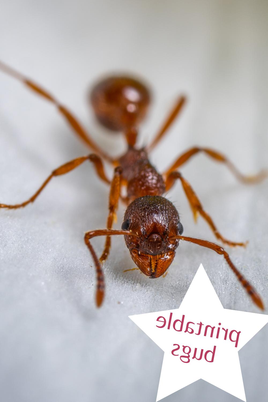 Est-ce que les fourmis dorment ?