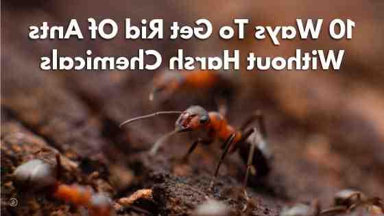 Pourquoi mon jardin est envahi de fourmis ?