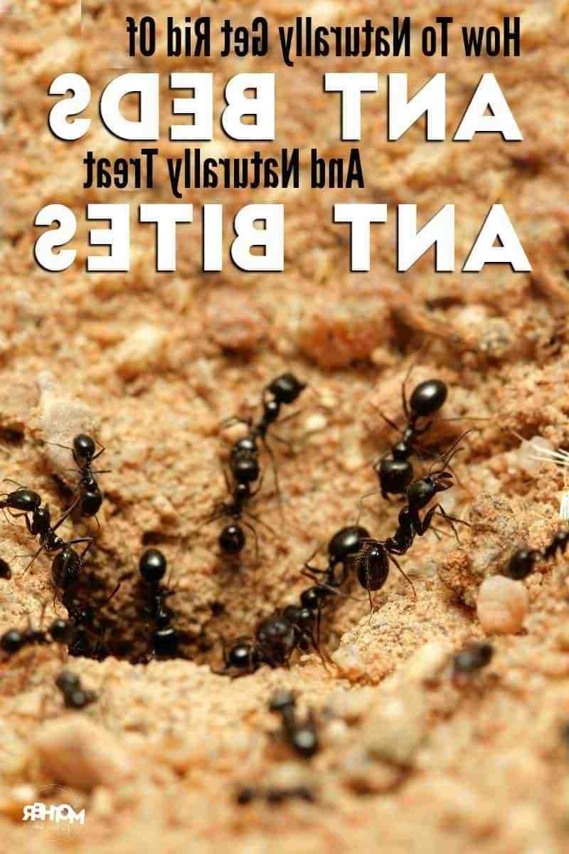 Quel est le meilleur insecticide contre les fourmis ?